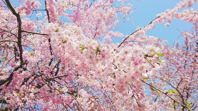 フェリシモのお花見シートがすごい|幹事さん必見!インスタ映え間違いなしのレジャーシートはこれ。